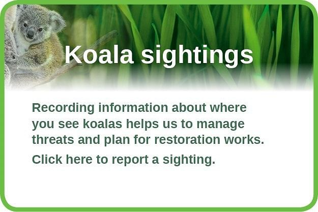 Koala habitat mapping