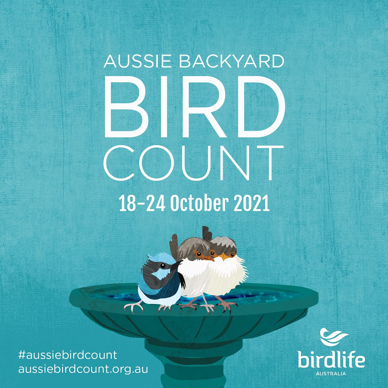 Take part in this year's Aussie Backyard Bird Count