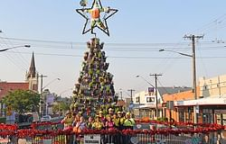 Living Christmas tree carries on recycled tradition